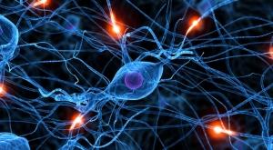 sinapsis-neurona