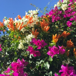 my-garden2-by-imarie