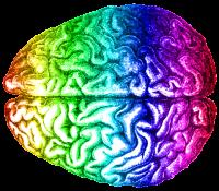 rainbow_brain_aug_2014-e1435152081858
