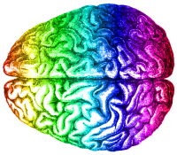 rainbow_brain_aug_2014-e1435152081858