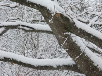 invierno6-by-imarie-nunez