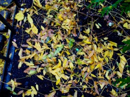 LLega el otoño. NY